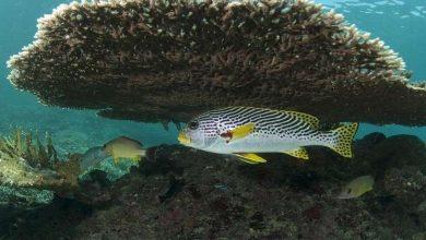 "Photo of المرجان يبهر البشرية بقدرته على ""الابتكار""!"
