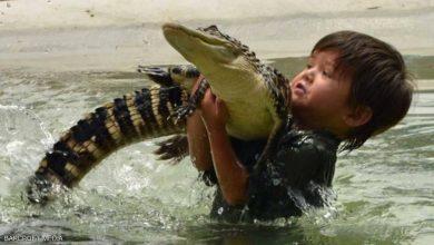 Photo of طفل شجاع يحترف التعامل مع الحيوانات الخطيرة