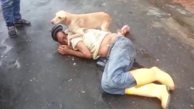 Photo of مليون مشاهدة لفيديو الكلب الوفي