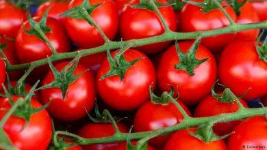 Photo of اكتشاف فوائد جديدة للطماطم