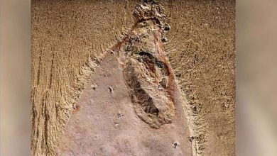 Photo of اكتشاف مخلوق غريب عمره نصف مليار سنة في الصين