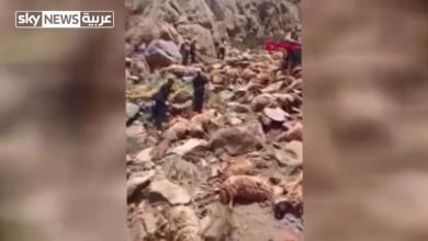 Photo of بالفيديو.. نفوق 500 خروف في انتحار جماعي شرق تركيا