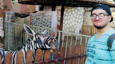 Photo of حمار وحشي «مزيّف» في مصر يُثير ضجة على مواقع التواصل