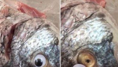 """Photo of متجر في الكويت يبيع أسماكا بـ""""عدسات لاصقة"""""""