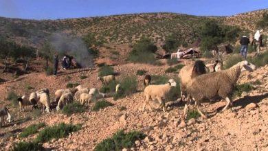 Photo of السعودية : راعي أغنام يقيد كفيله في الصحراء ! ( فيديو )