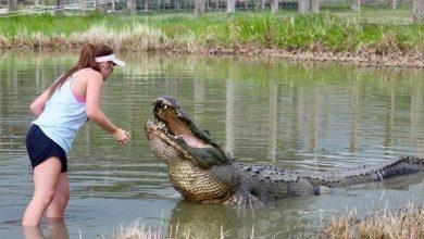 Photo of تمساح يختطف حارسة غابات في أستراليا !