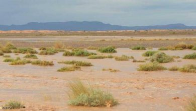 Photo of فكرة عالمية مكلفة.. إغراق الصحراء بالمياه لإصلاح كوكب الأرض