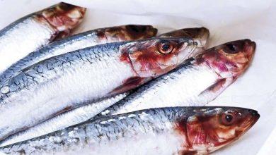 Photo of علماء : هذا النوع من السمك هو الأكثر فائدة لجسم الإنسان