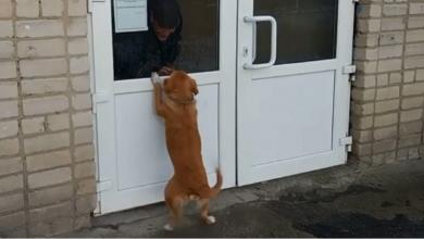 Photo of كلب ينتظر صاحبه لأسابيع عند باب المشفى (فيديو)