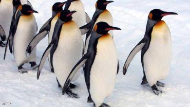Photo of الاحتباس الحراري يضع الثدييات والطيور القطبية بمأزق غذائي