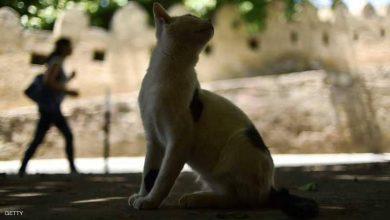 Photo of مصر.. القطط الجائعة التهمت جثة مربيها المسن
