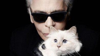 Photo of 3 ملايين دولار … ثروة قطة المصمم العالمي كارل لاغرفيلد