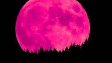 Photo of «القمر الوردي».. ظاهرة المرة الواحدة.. الجمعة