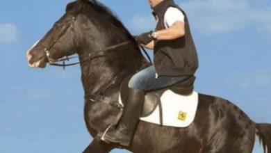 Photo of فيديو .. أحمد السقا يقفز الحواجز بحصانه