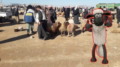 "Photo of "" كبش سوري "" يعرض للبيع بمبلغ يساوي راتب موظف لحوالي 10 سنوات"
